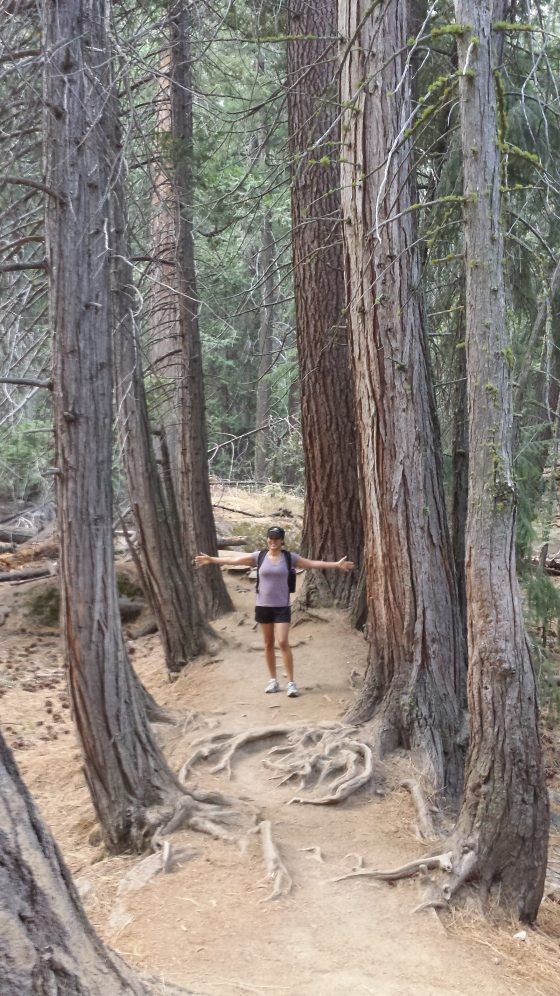 These trees were part of the trail! So cool!