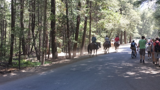 Horseback riding cutting across the road