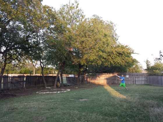 After picture - Backyard tree trimming and removal is done!