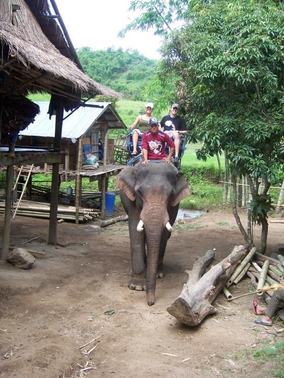 On our elephant!