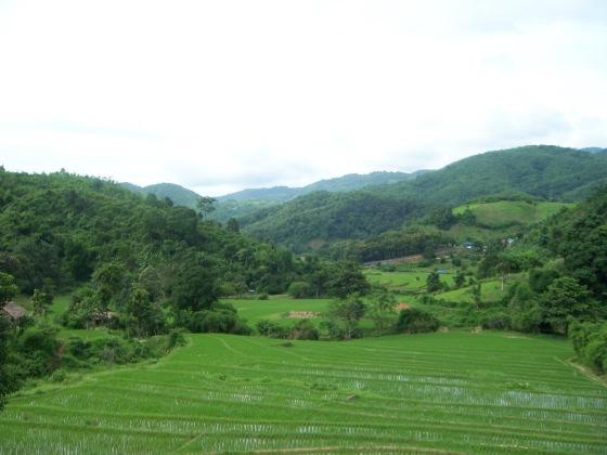 Rice fields in Northern Thailand!
